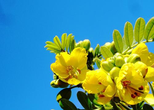 黄色の花と空.jpg