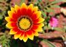 花オレンジ赤.jpg