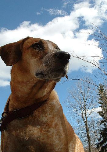 犬と空.jpg