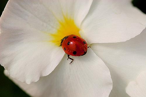 花とてんとう虫.jpg