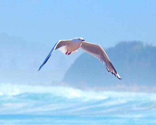 かもめ飛ぶ海.jpg