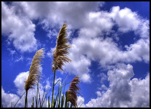 稲穂と空.jpg