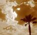 オレンジ空と椰子の木.jpg